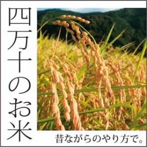 四万十の米