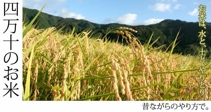 四万十のお米