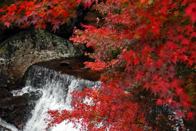 黒尊渓谷紅葉まつり