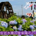 四万十川花紀行2014 安並水車の里紫陽花のまつり
