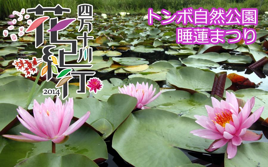 四万十川花紀行2014 トンボ自然公園睡蓮まつり